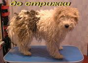стрижка собак и кошек в Калининграде