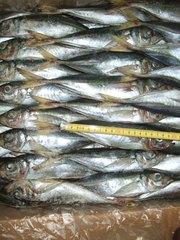 Продажа рыбы Мавритания