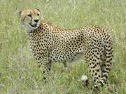 Серебряное ожерелье Танзании. Последние места на групповой тур.