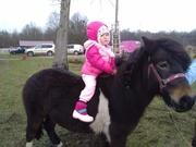 Сельский туризм. Пони ферма. Катание детей на пони. Калининград.